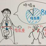 呼吸の8割は横隔膜のおかげ!