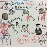 パパ筋 広背筋~意外と知らない肩のヒミツ Part4